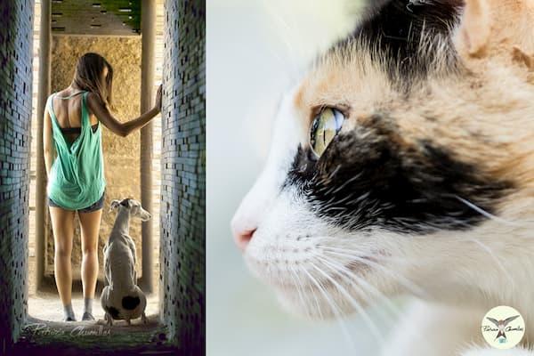 Mujer, perro y gato.
