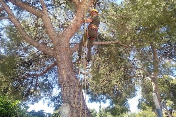Hombre podando árbol.